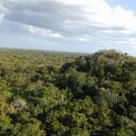Elmiradortigre 150x150 - El Mirador, Petén - Ciudad Maya