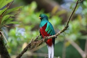El Quetzal. Fotografía de: Gerardo Orrego.