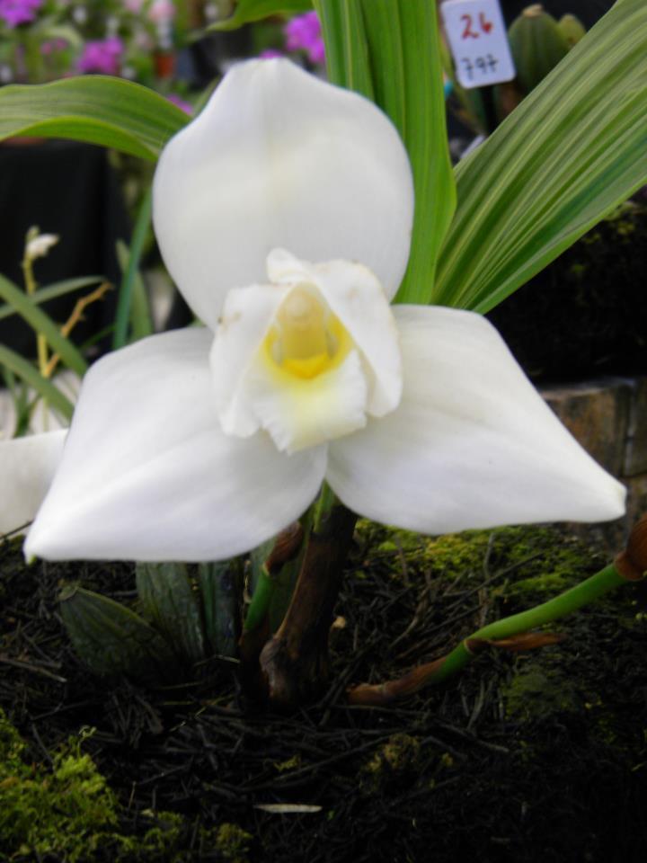 Galería – Fotos de Flores