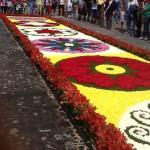 Alfombras de Semana Santa 11 foto por Gustavo A. Cacheo. 150x150 - Galería - Fotos de las Tradicionales Alfombras de la Cuaresma y Semana Santa
