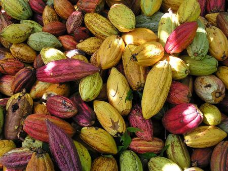 cacao 1 - El Origen de la Moneda en Guatemala