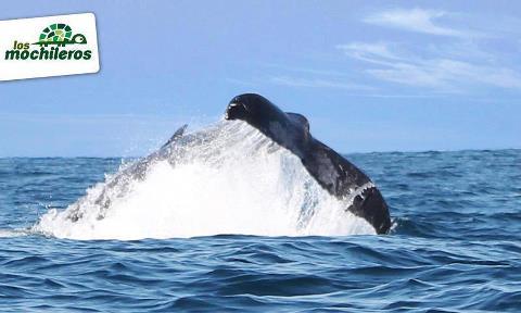 Los Mochileros - Avistamiento de ballenas Feb 24 2012 - 2