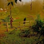 Alta Verapaz foto por Waseem Syed 150x150 - Galeria - Fotos de Guatemala por Waseem Syed