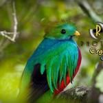 El Quetzal foto por Enmanuel Ramirez 150x150 - Galeria - Fotos de Guatemala por Enmanuel Ramirez
