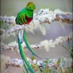 El Quetzal foto por Enmanuel Ramirez 2 150x150 - Galeria - Fotos de Guatemala por Enmanuel Ramirez