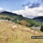 MMM galas pastorcita Cuchumatanes Huehue 218 150x150 - La Sierra de Los Cuchumatanes