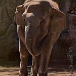 Trompitas la elefantita en zoológico La Aurora foto por Karla Castellanos 150x150 - Galeria - Fotos de Guatemala por Karla Castellanos
