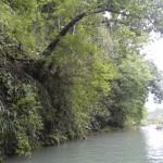 Saltos en Semuc Champey desde los árboles 150x150 - Guía Turística - Semúc Champey, Alta Verapaz