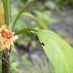 Sorprendentes y curiosas plantas 150x150 - Guía Turística - Semúc Champey, Alta Verapaz