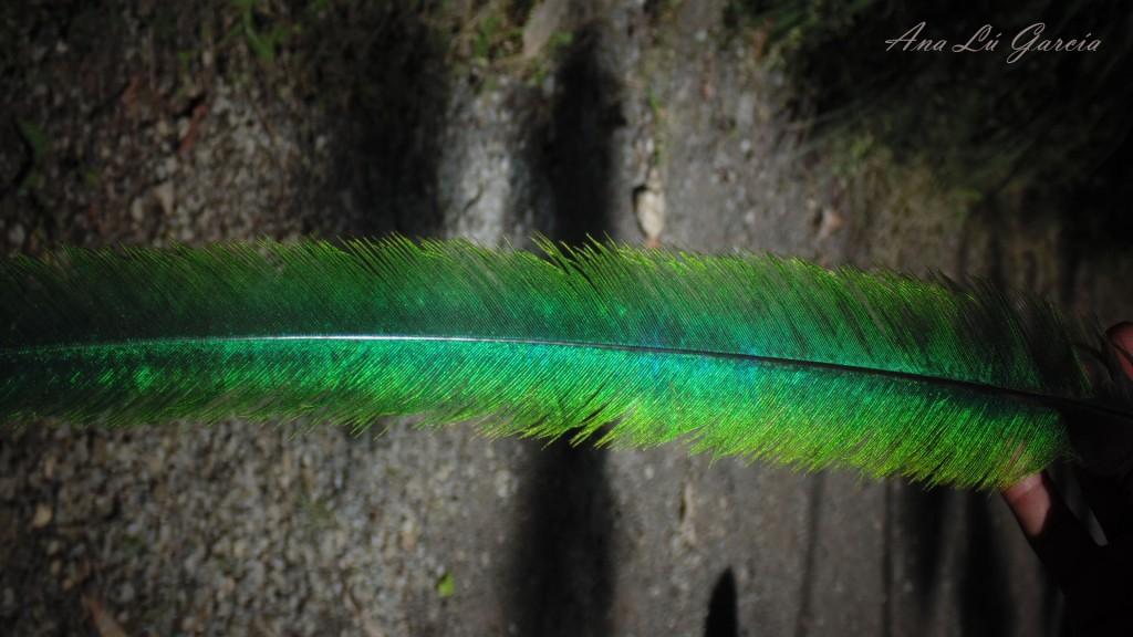 16 1024x576 - Guía Turística - Ranchitos del Quetzal