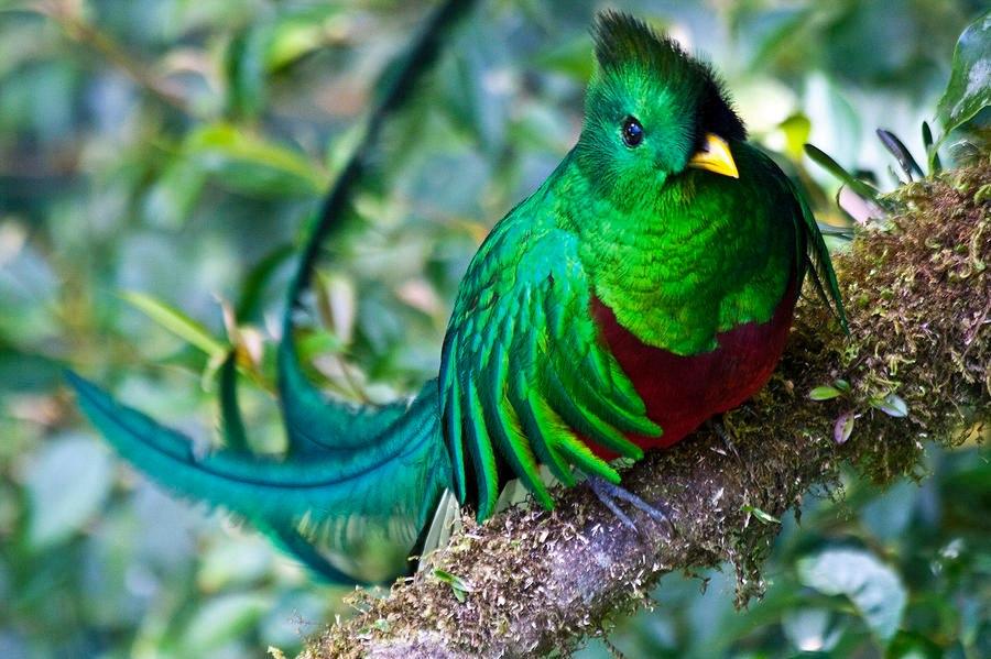 Guía Turística – Ranchitos del Quetzal