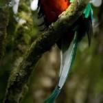 Fotografía de Roberto Quesada 150x150 - Guía Turística - Ranchitos del Quetzal