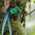 Quetzal foto por Abner Chinchilla 150x150 - Guía Turística - Ranchitos del Quetzal