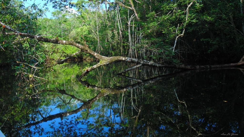 arbol 1024x577 - Guía Turística - Aguas Calientes en Río Dulce, Izabal