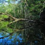 arbol 150x150 - Guía Turística - Aguas Calientes en Río Dulce, Izabal