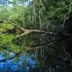 arbol1 150x150 - Guía Turística - Aguas Calientes en Río Dulce, Izabal