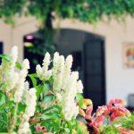 fotos para mundo chapin 4 150x150 - La Azotea: Arte, historia y café