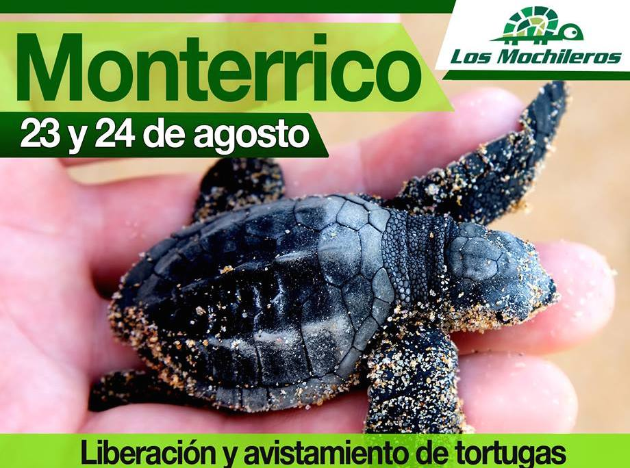 Evento – Viaja con los Mochileros a la Liberación de Tortugas, Agosto 23/24