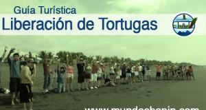 Guía Turística – Liberación de Tortugas