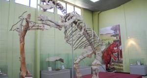 Guía Turística – Museo de Paleontología y Arqueología en Estanzuela, Zacapa