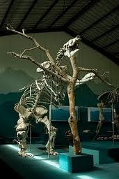 nuestrasmaravillasbi - Guía Turística - Museo de Paleontología y Arqueología en Estanzuela, Zacapa