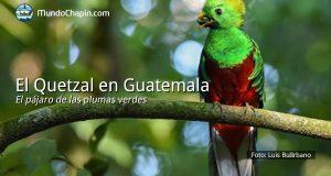 El Quetzal en Guatemala – el pájaro de las plumas verdes