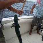 Dorado conocido como Mahi Mahi 150x150 - Guía Turística - Pesca Deportiva en Guatemala