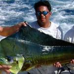 Mahi Mahi 150x150 - Guía Turística - Pesca Deportiva en Guatemala