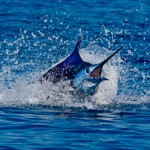 Pez Vela INGUAT 150x150 - Guía Turística - Pesca Deportiva en Guatemala