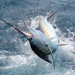 news1 150x150 - Guía Turística - Pesca Deportiva en Guatemala
