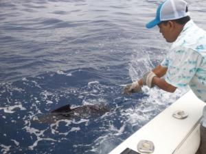 pesca deportiva 17 mundochapin 300x225 - Guía Turística - Pesca Deportiva en Guatemala