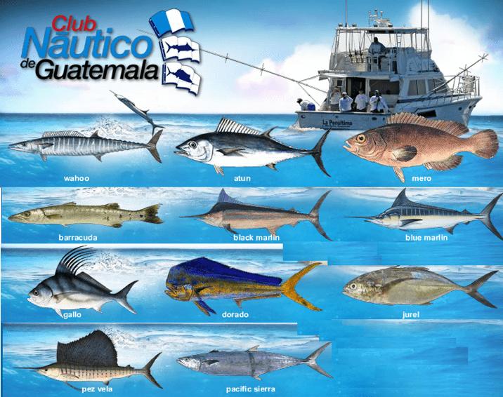 pesca deportiva 23 mundochapin - Guía Turística - Pesca Deportiva en Guatemala