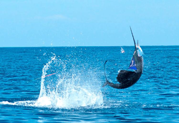 pesca deportiva 3 mundochapin - Guía Turística - Pesca Deportiva en Guatemala