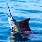 pescadeportivaguatemala10 150x150 - Guía Turística - Pesca Deportiva en Guatemala