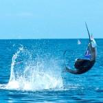pescadeportivaguatemala11 150x150 - Guía Turística - Pesca Deportiva en Guatemala