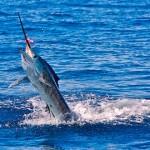 pescadeportivaguatemala2 150x150 - Guía Turística - Pesca Deportiva en Guatemala