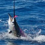 pescadeportivaguatemala3 150x150 - Guía Turística - Pesca Deportiva en Guatemala
