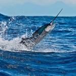 pescadeportivaguatemala5 150x150 - Guía Turística - Pesca Deportiva en Guatemala