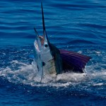 pescadeportivaguatemala8 150x150 - Guía Turística - Pesca Deportiva en Guatemala