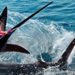 slide5 150x150 - Guía Turística - Pesca Deportiva en Guatemala