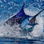 slide7 150x150 - Guía Turística - Pesca Deportiva en Guatemala