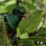 Guía Turística – Refugio del Quetzal, San Marcos