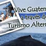 Evento – Avistamiento de ballenas, delfines, y diversiones