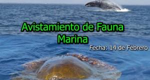 Evento – Avistamiento de Fauna Marina