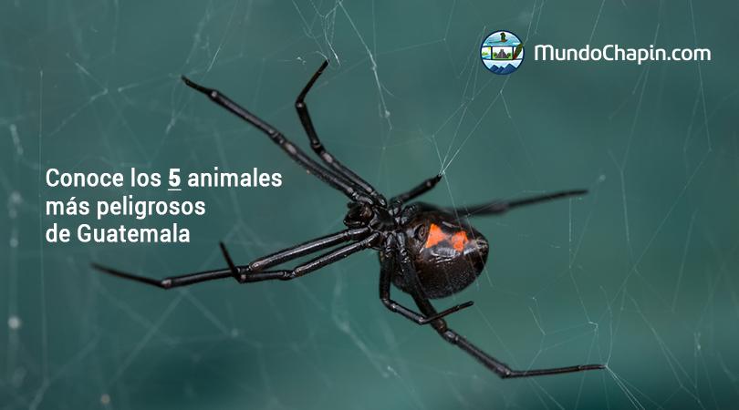 Conoce los 5 animales más peligrosos de Guatemala