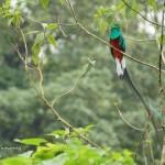 El Quetzal en San Marcos foto por Carlos Echeverria 150x150 - Fotos de Guatemala por Carlos Echeverría
