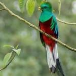 El Refugio del Quetzal ubicado en San Rafael Pie de la Cuesta departamento de San Marcos foto por Carlos Echeverria 150x150 - Fotos de Guatemala por Carlos Echeverría