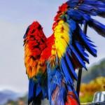 Guacamaya en Casa Santo Domingo foto por Mario Mejia 150x150 - Galería de Fotos de Guatemala por Mario Mejía