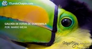 Galería de Fotos de Guatemala por Mario Mejía