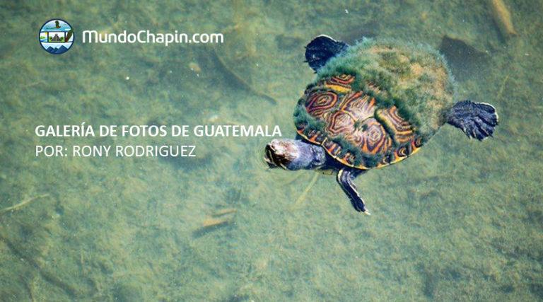 Galeria de Fotos de Guatemala por Rony Rodriguez